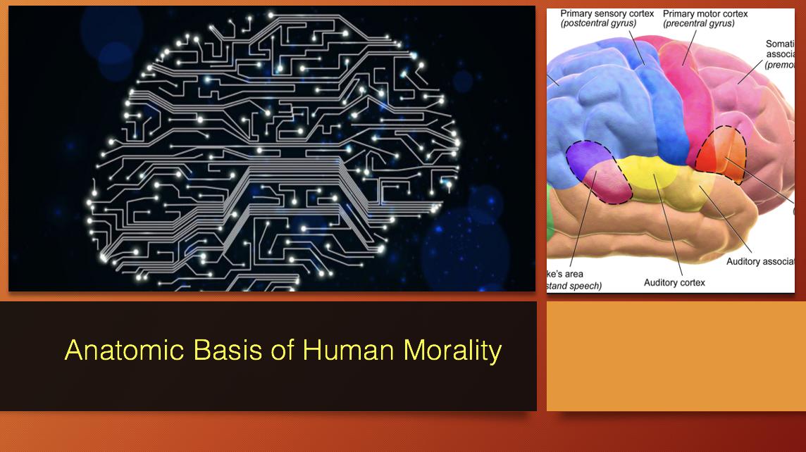 Anatomic Basis of Human Morality