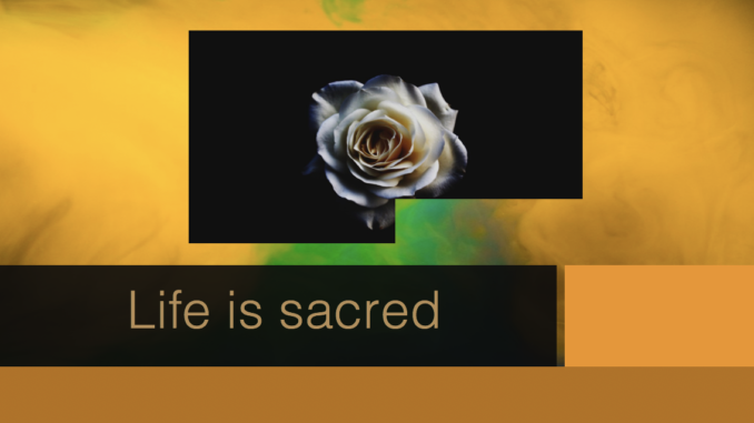 Life is sacred in the Quran