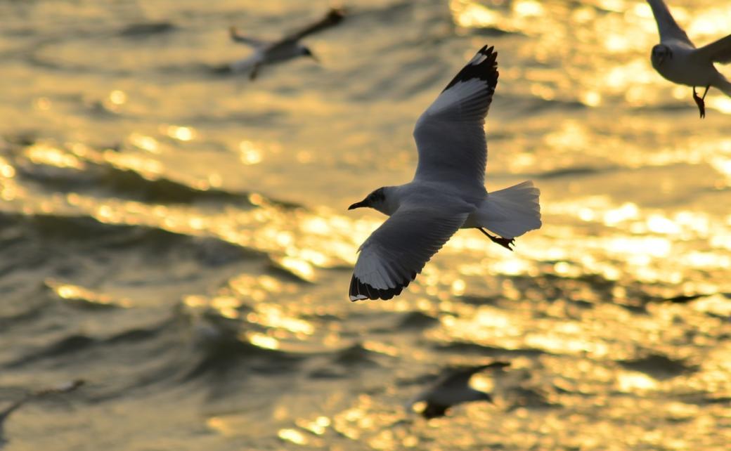 Muslims Around The Globe: Bangladesh. ocean, bird, qpeace.net