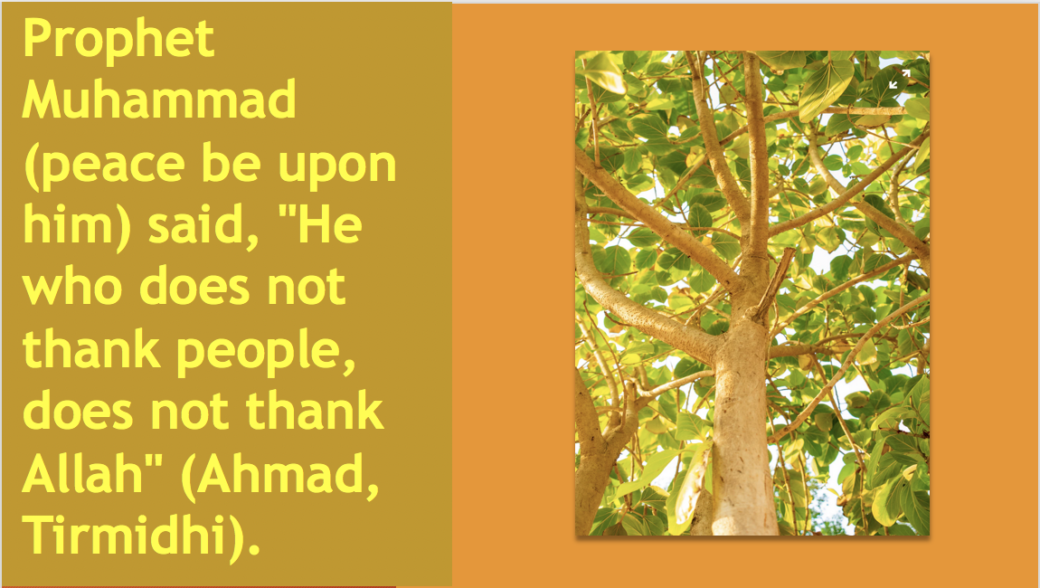 What is Right With Islam? It's The gratitude towards the Creator. qpeace.net