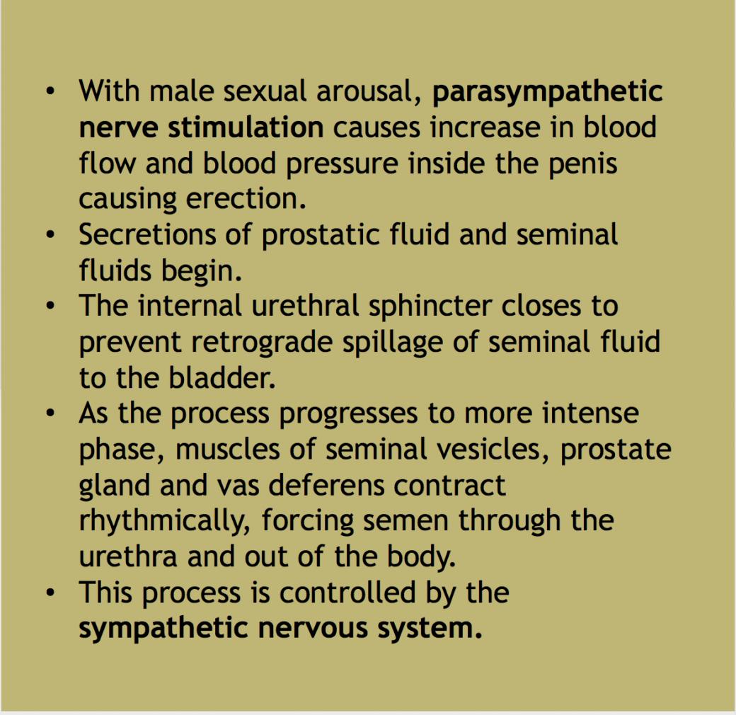 Anatomy of semen ejaculation