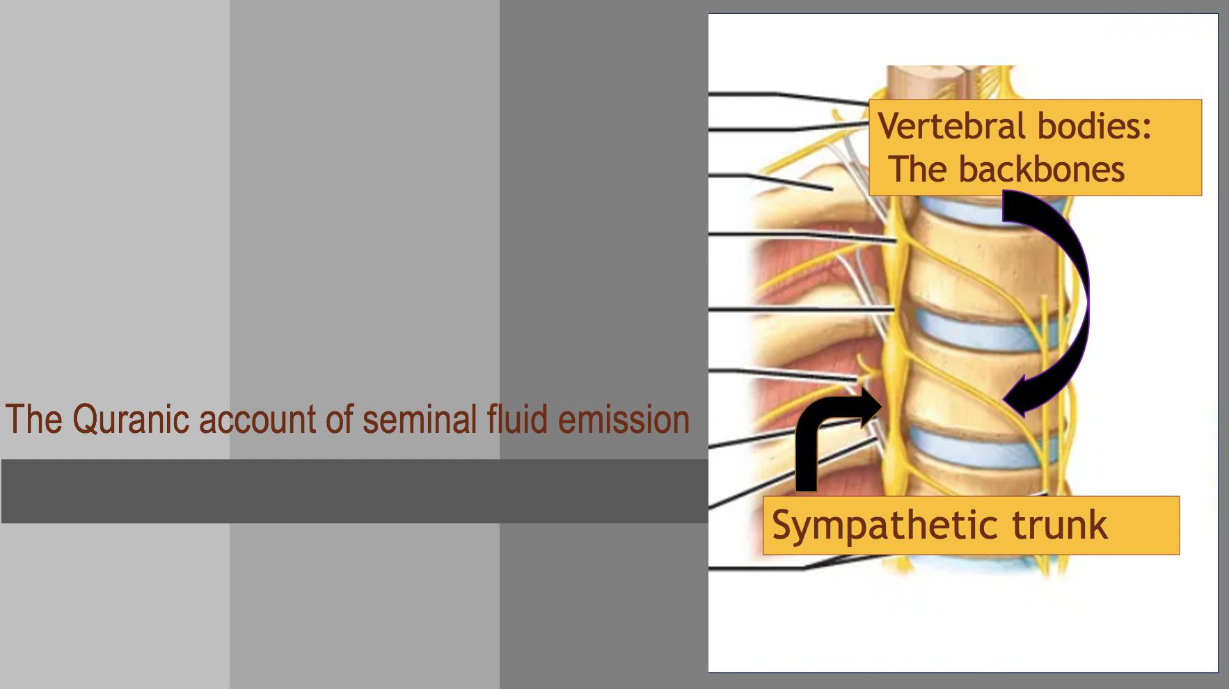 The Quranic account of Seminal fluid Emission